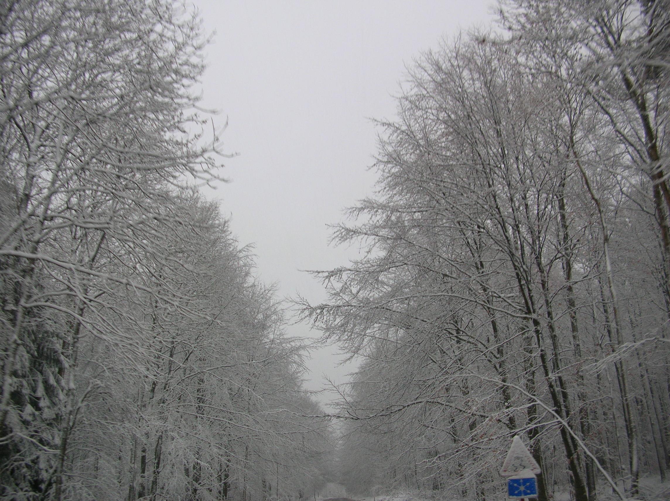 hiver05038.jpg