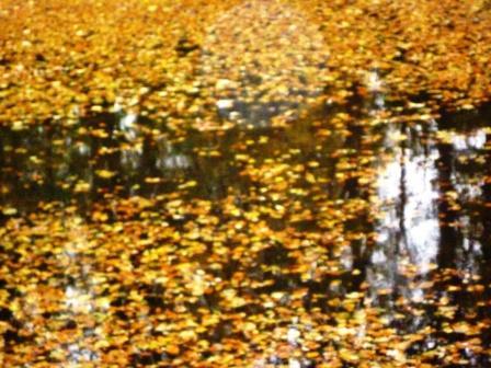 Apnées à la Fête de l'eau dans carnets ar046web