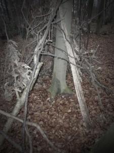 decembre2011-3-291-225x300