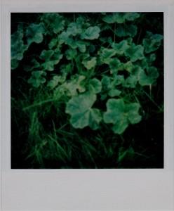 Qu'en faites-vous du gel et des béatitudes de l'été herbes1-248x300